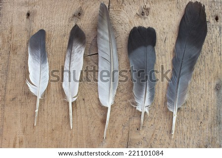 Feathers on wooden background - stock photo