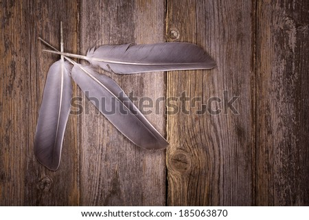 Feathers over old wood background