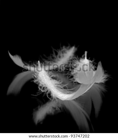 Feathers. The bird's feathers lies on a black background with reflexion - stock photo