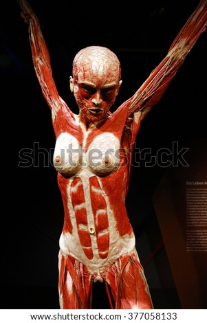 February 17 2015 Berlin Fully Plastinated Stock Photo Royalty Free