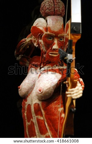february 17 2015 berlin fully plastinated stock photo 377058133, Muscles