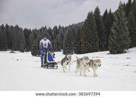 February 27, 2016 - Lavarone (Italy) Race of sled dogs on the Italian alps