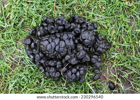 feces sheep stock photo (safe to use) 230296540 - shutterstock