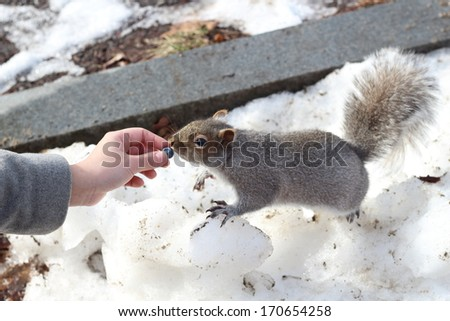 Feeding a squirrel - stock photo
