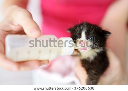Feeding cute little orphan kitten with milk replacement - stock photo