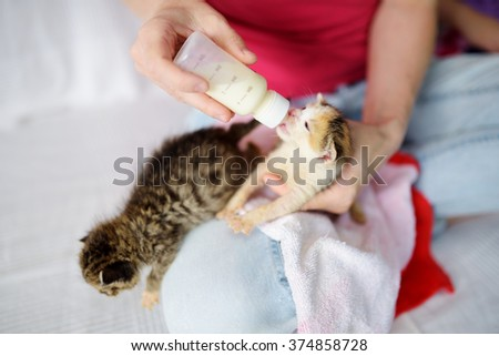 Feeding cute little orphan kitten with milk replacer - stock photo