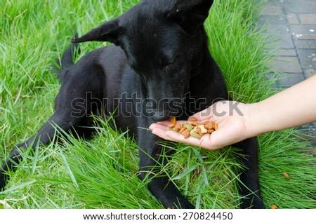 Feeding dog by woman hand - stock photo