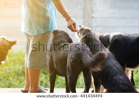 Feeding dogs - stock photo
