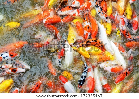 Stock images royalty free images vectors shutterstock for What to feed koi carp