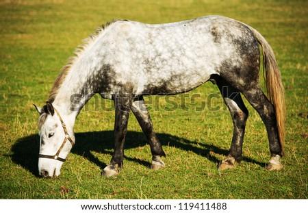 Feeding horse - stock photo