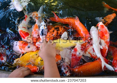 Stock images royalty free images vectors shutterstock for What to feed baby koi