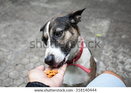 Feeding the dog by hand - stock photo