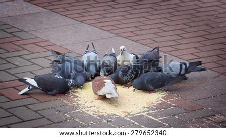 Feeding the pigeons on the street - stock photo