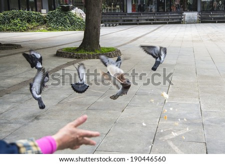 Feeding the pigeons with bread crumbs in the park - stock photo