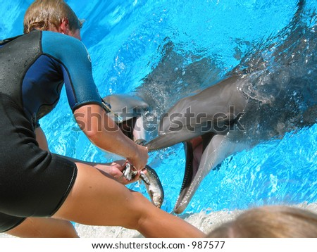 Feeding time for some dolphins. - stock photo