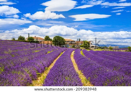 Feelds of blooming lavander, Valensole, Provence, France, europe - stock photo
