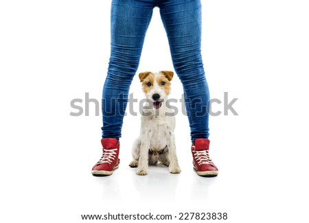 Feet and dog isolated on white background in studio - stock photo