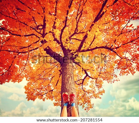 feet resting on a tree trunk during fall when the leaves are turning colors toned with a retro vintage instagram filter - stock photo