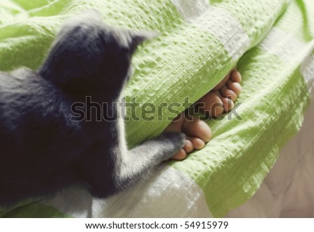 feet under blanket and cat cuddling - stock photo