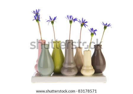 Felicia flowers in little vases isolated over white background - stock photo