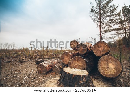felled timber in the forest - stock photo