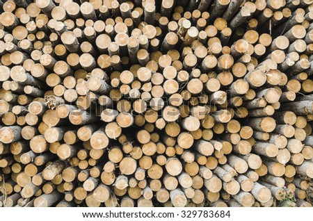 Felled timber lying in piles. Russia, Arkhangelsk region