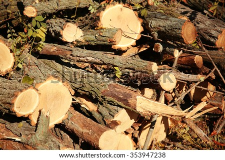 Felled  tree trunks stacked together - stock photo