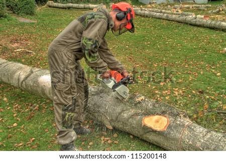 felling of trees, lumberjack - stock photo