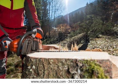 Felling the tree Lumberjack cutting tree in forest - stock photo