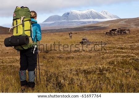 Femal Hiker is looking to a reindeer - stock photo