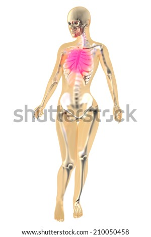 Female anatomy. Pain in the chest. 3D illustration. - stock photo