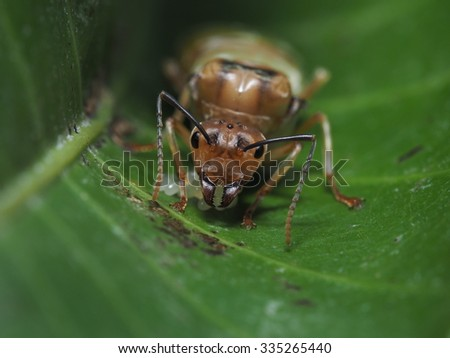 Female ant and her eggs