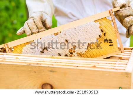 Female beekeeper controlling beehive and comb frame  - stock photo
