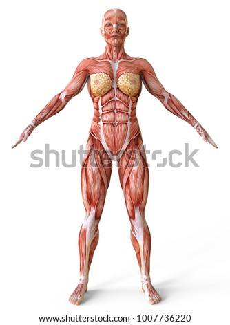 Full Body Skin Anatomy Diagram Female Wiring Diagram Electricity