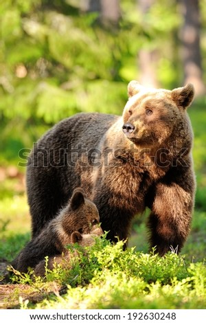 Female brown bear with cubs - stock photo