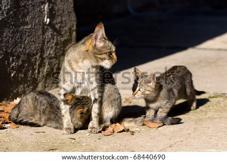 female cat and her kittens - stock photo