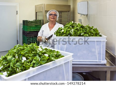 Female chef holding knife with cut leafy vegetable in hospital kitchen - stock photo