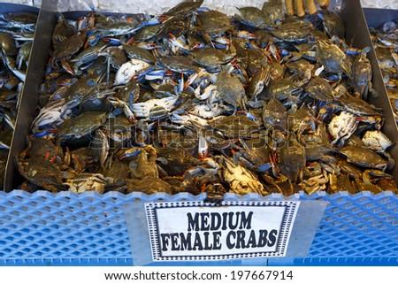 Female Crabs at the Washington DC Fish Market - stock photo