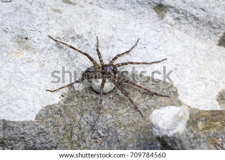 Egg Sac Stock Images, Royalty-Free Images & Vectors ...