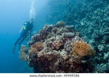 Female diver hovering over a coral reef in the Red Sea, Egypt - stock photo
