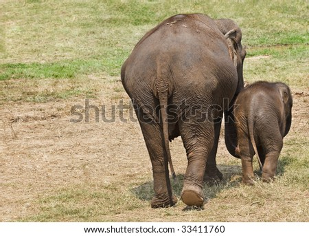 Female elephant with her baby. Shot from behind.