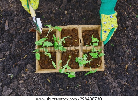 Female farmer with small gardening tool replanting sprouts - stock photo