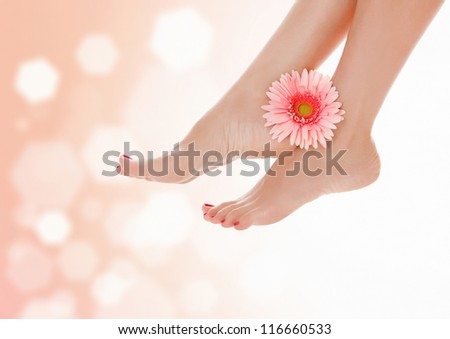 Female feet with pink gerbera flower on pastel blurred background with a space for your text