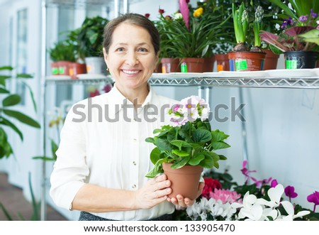 Female florist with auricula (Primula) at flower store - stock photo
