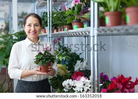 Female florist with Cyclamen plant at flower store  - stock photo