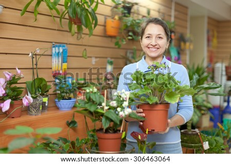 Female florist with primula flower at flower store  - stock photo