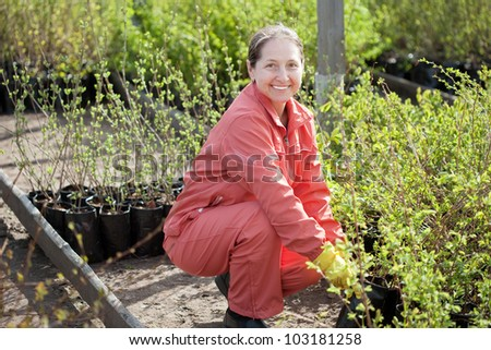Female gardener chooses  sprouts at market