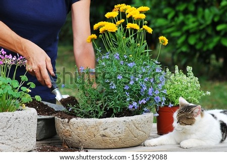 Female gardener planting flowers in a pot  - stock photo
