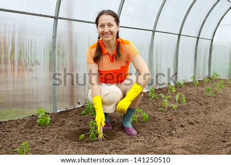 Female gardener planting tomato spouts in hothouse - stock photo