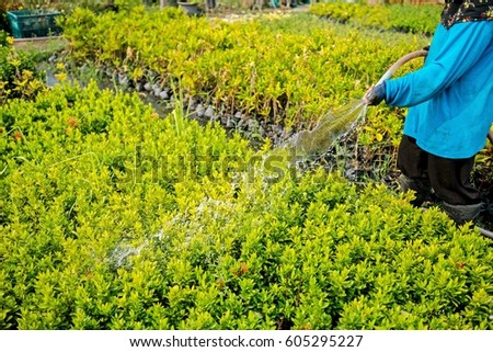 female gardener watering the plants with a rubber tube.